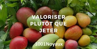 logo-1001-noyaux
